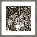 Early Autumn Sepia Framed Print