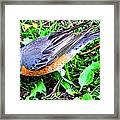 Early Bird Catches The Worm Framed Print