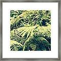 Earthing Dreams Framed Print
