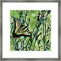 Eastern Tiger Swallowtail Ins 76 Framed Print