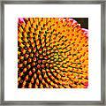 Echinacea Bloom Framed Print