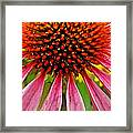 Echinacea Flower Upclose Filtered Framed Print