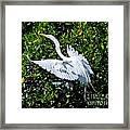 Egret 1 Framed Print