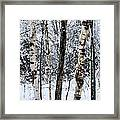 Elders In A High Country Grove Framed Print