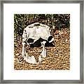 Elephant Skull Framed Print