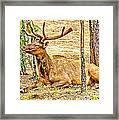 Elk In Kiabab National Forest Arizona Framed Print
