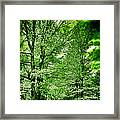 Emerald Clearing Framed Print