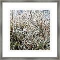 Encased In Ice Framed Print