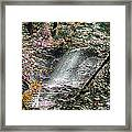Enchanted Forest - Featured In Wildlife Group Framed Print