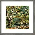 Enchanted Forest Tree Framed Print