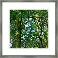 Enchanted Forest Framed Print