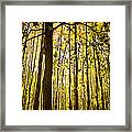 Enchanted Woods Framed Print