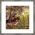 Equestrian Ornament Framed Print