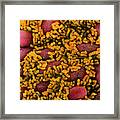 Escherichia Coli Bacteria In The Gut Framed Print