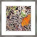 Everglades 6 Framed Print