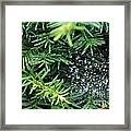 Evergreen Rain Framed Print