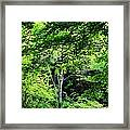 Every Shade Of Green Framed Print