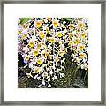 Exotic Aerides Framed Print