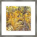 Exotic Plants Of The Dunes Framed Print