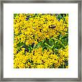 Exploring Goldenrod 5 Framed Print