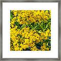 Exploring Goldenrod 6 Framed Print