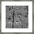 Extreme Contrast Bare Trees During Winter Photograph Framed Print
