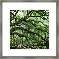 Fairy Tale Branches Framed Print