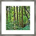 Fairy Trees Framed Print
