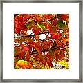 Fall 08-005 Framed Print