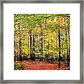Fall 20 Framed Print