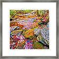 Fall 2014 Y213 Framed Print
