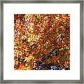 Fall Framed Print