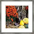 Fall Bounty Framed Print