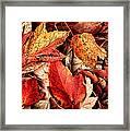 Fall Carpet Framed Print