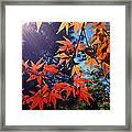 Fall Color 1 Framed Print