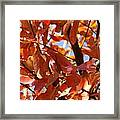 Fall Color 2 Framed Print