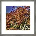 Fall Color At Biltmore Framed Print