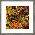 Fall Color Creekside Framed Print