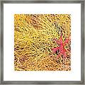 Fall Colored Horsetail And Fireweed  Framed Print