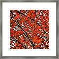 Fall Colors 2014-10 Framed Print