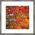 Fall Colors 2014-4 Framed Print