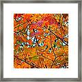 Fall Colors 2014-5 Framed Print
