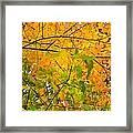 Fall Colors 2014-8 Framed Print