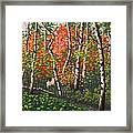 Fall Colors 4 Framed Print