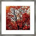 Fall Colors Cape May Nj Framed Print