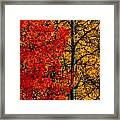 Fall Colors Dp Framed Print
