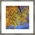 Fall Colors In The Sky  Framed Print