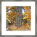Fall Driveway And Coco The Dog Framed Print
