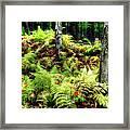 Fall Ferns Of Cannan Valley West Virginia Framed Print by Dan Carmichael