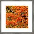 Fall Fiesta Framed Print